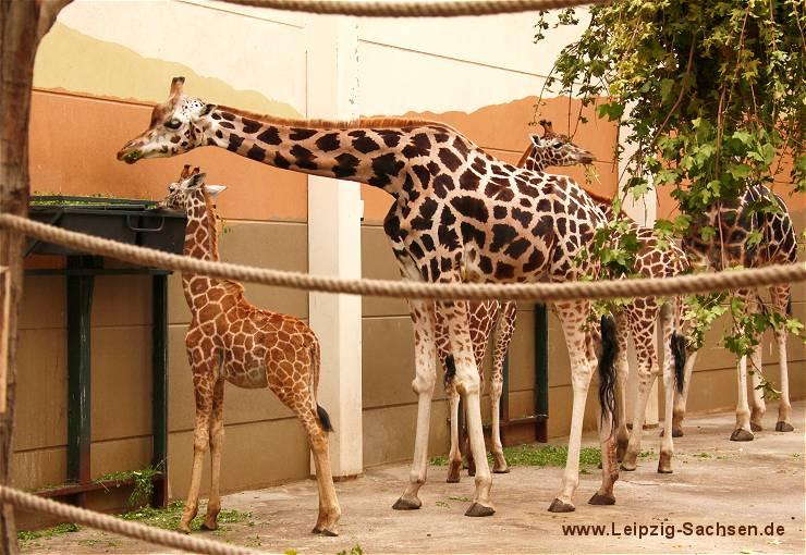 eintrittspreise zoo leipzig