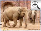 Zoo Leipzig - Elefanten