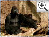 Pongoland im Zoo Leipzig - Die gr��te Menschenaffenanlage der Wel